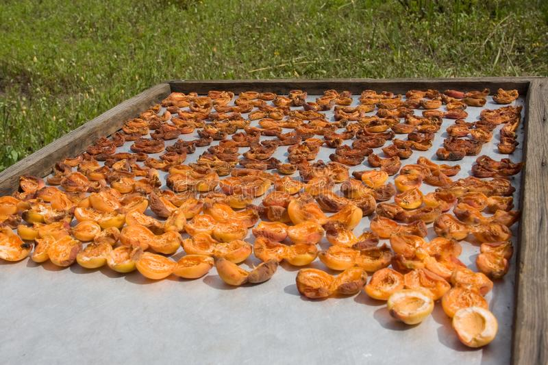 Drying apricot in the sun. Apricot halves are spread out on a metal sheet and dried in the sun. Drying apricot in the sun. Apricot halves are spread out on a stock image