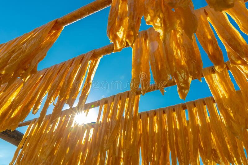 Drying bean-curd stick on bamboo pole under sunlight stock photo