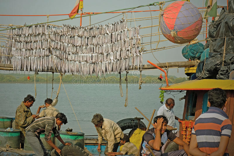 Download Drying the catch editorial photography. Image of ashore - 83705222