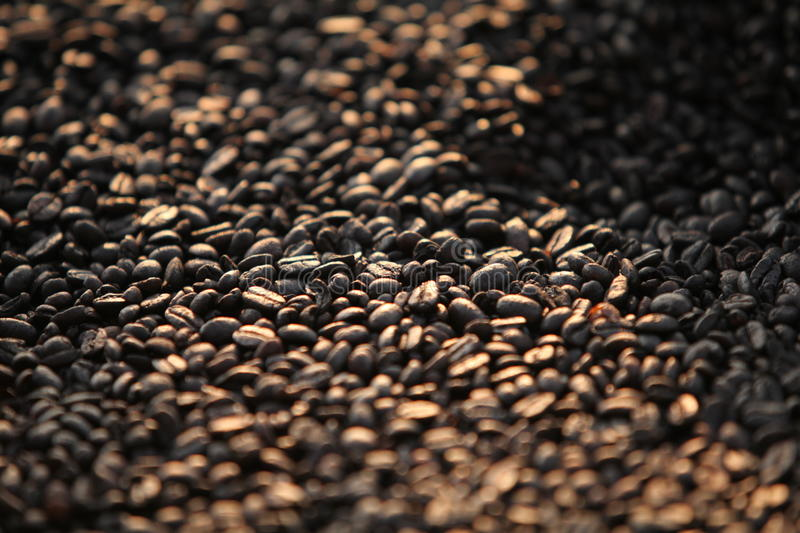 Drying coffee beans royalty free stock images