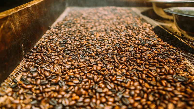 Drying coffee beans royalty free stock photos