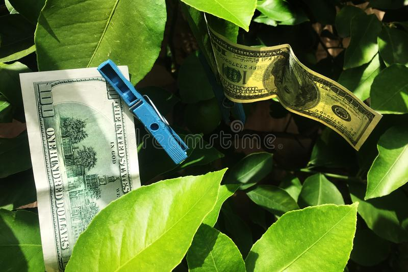 Drying 100 dollars bill royalty free stock images