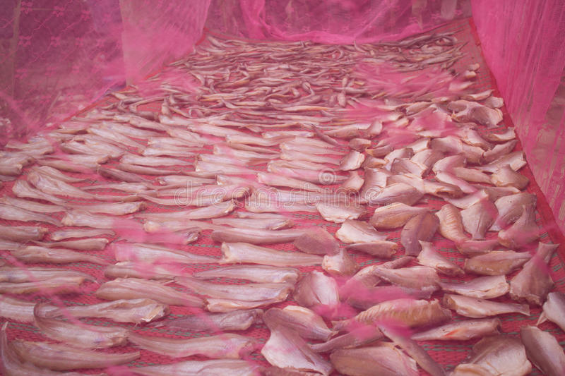 Drying Dried Fish Under a Mosquito Net in Cambodia Asia Food royalty free stock photos