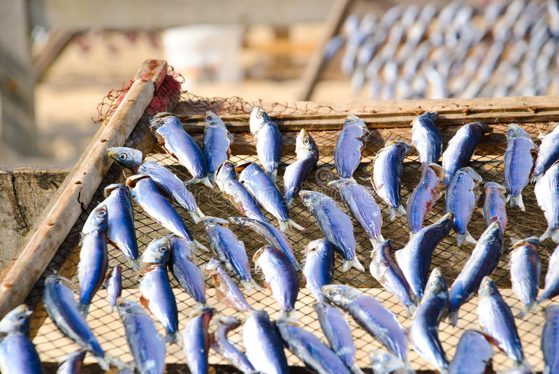 Download Drying fish stock photo. Image of healthy, prepared, lattice - 24620874