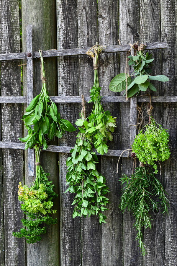 Drying fresh herbs royalty free stock images