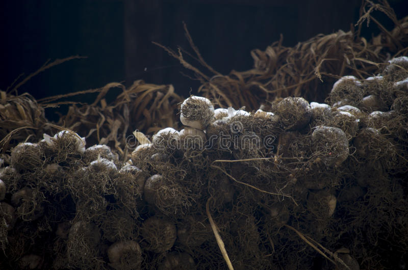 Drying Garlic. Garlic being dried outside of local houses in a historical place of Nepal, Bungamati royalty free stock photos