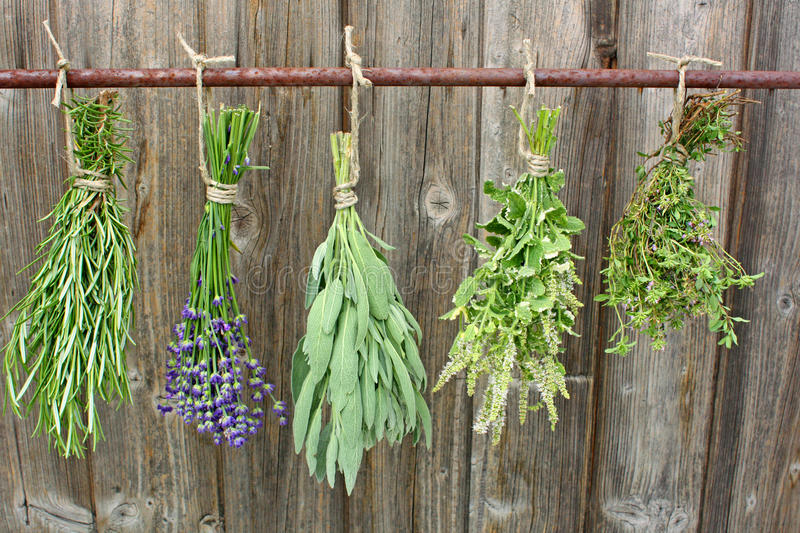 Drying herbs stock photography
