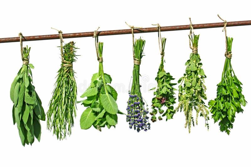 Drying herbs stock photo