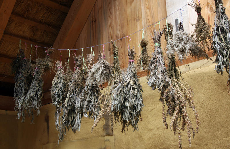 Drying herbs and spices royalty free stock photo