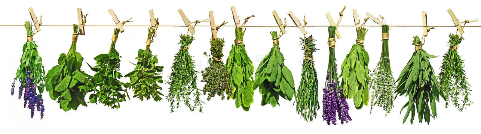 Drying Herbs royalty free stock images