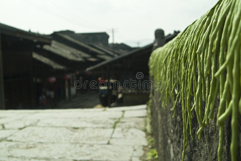 Drying long green beans on bridge. Long green beans are being dried on a bridge in Guilin, China royalty free stock photography