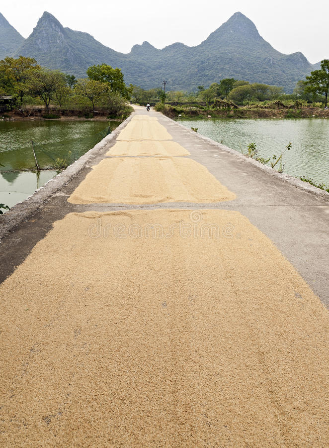 Drying Rice Grains along Street. Grains of rice dry on a small street in Guilin with the towering limestone monoliths in the background stock images