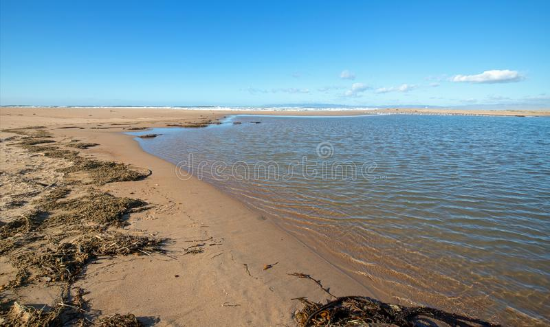 Drying Kelp and sea grass at the Santa Maria river estuary at Rancho Guadalupe Sand Dunes in Central California USA. Drying Kelp and seagrass on narrow strip of royalty free stock image