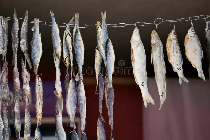 Drying of small, salted fish on a cord royalty free stock photo