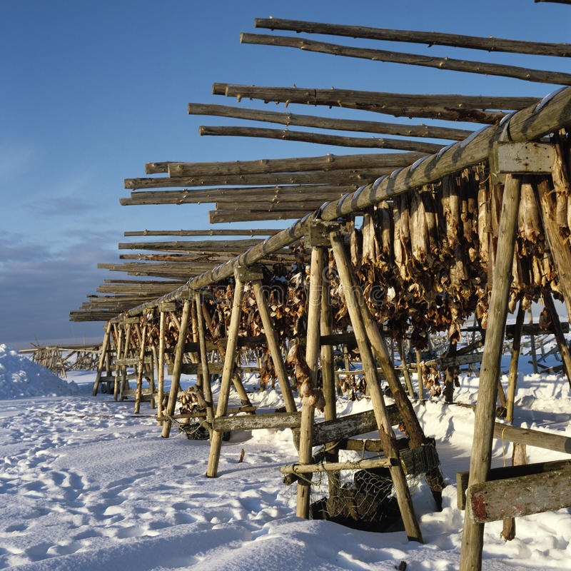 Download Drying stockfish Iceland stock image. Image of seafood - 27958945