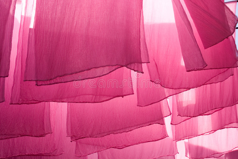 dryingkuggar royaltyfri foto
