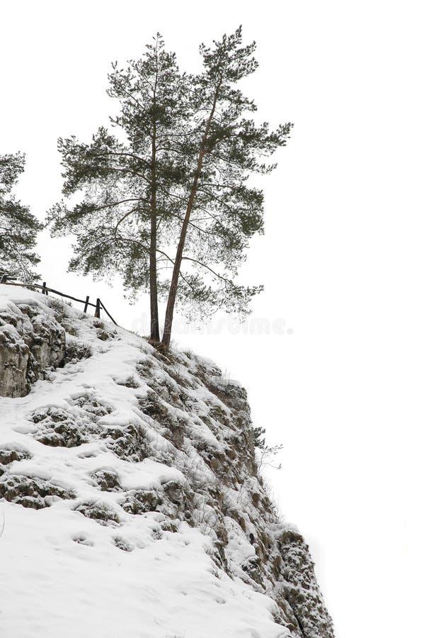 drzew odizolowanych wzgórz obraz stock