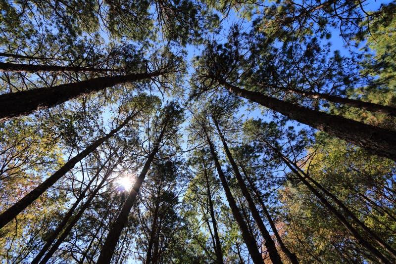 Drzewa światło obrazy royalty free