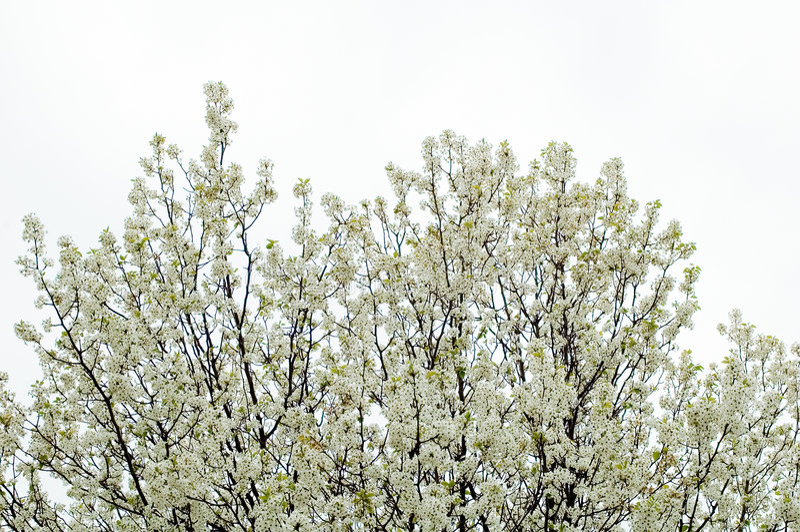Download Drzewa zdjęcie stock. Obraz złożonej z drzewa, carolina - 137434