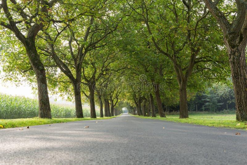 Drzewa 7 obraz royalty free