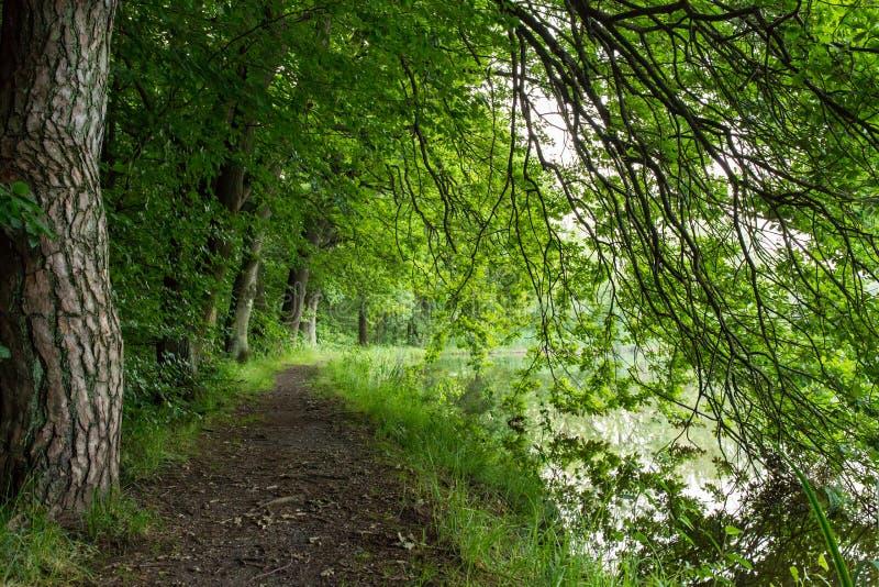 Drzewa 6 obrazy royalty free