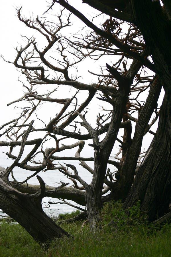 drzewa obraz royalty free