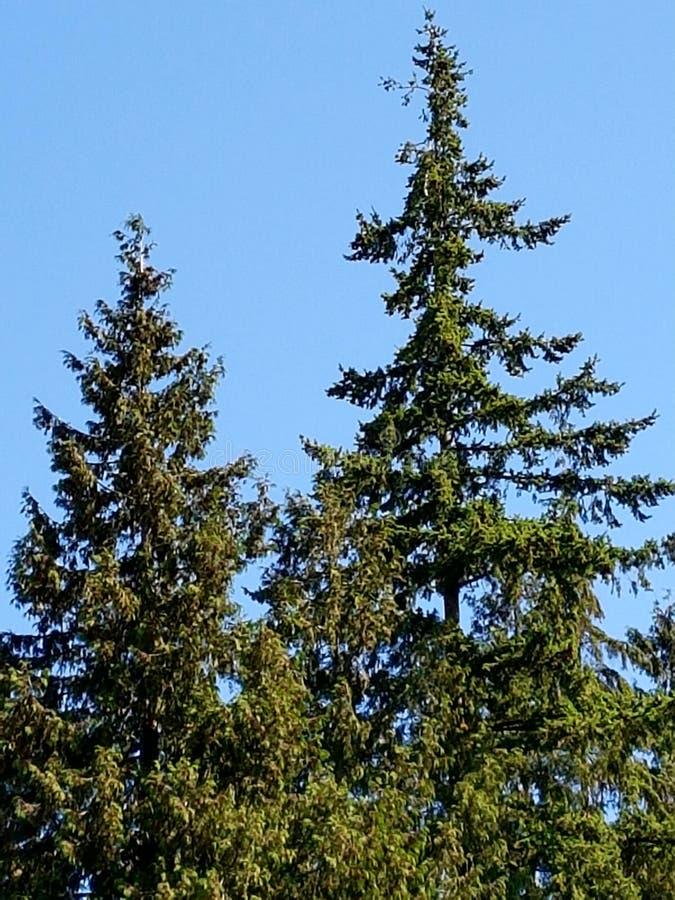 Drzewa 2017 zdjęcie stock