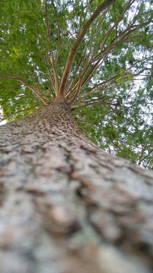Drzewa Alabama obraz royalty free