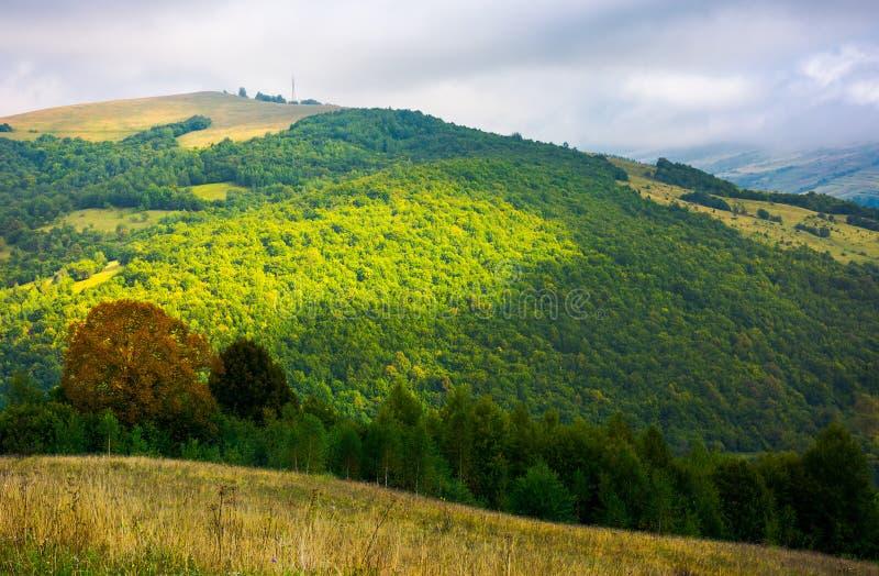 Drzewa blisko doliny w górach na zboczu pod niebem z chmurą fotografia stock