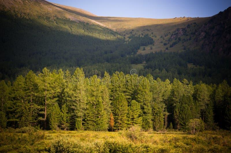 Drzewa blisko lasu na wzgórzach zdjęcia stock