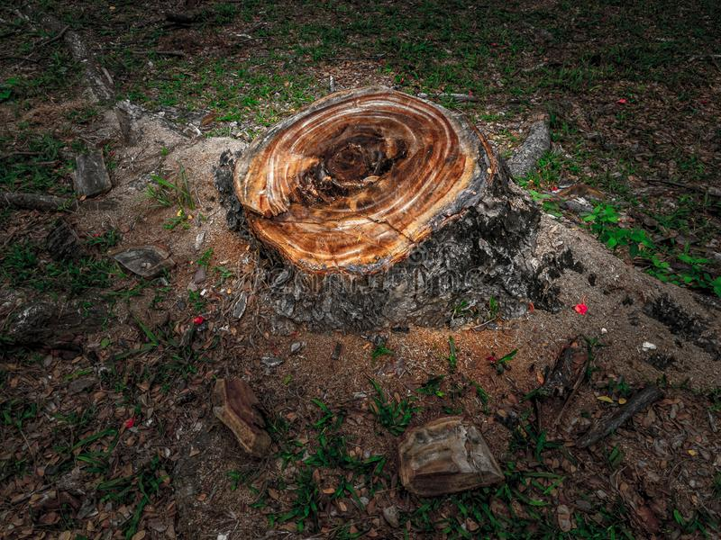 Drzewa cięcia puszek ale świeży fiszorek na ziemi, problem związany z ochroną środowiska pojęcie fotografia royalty free