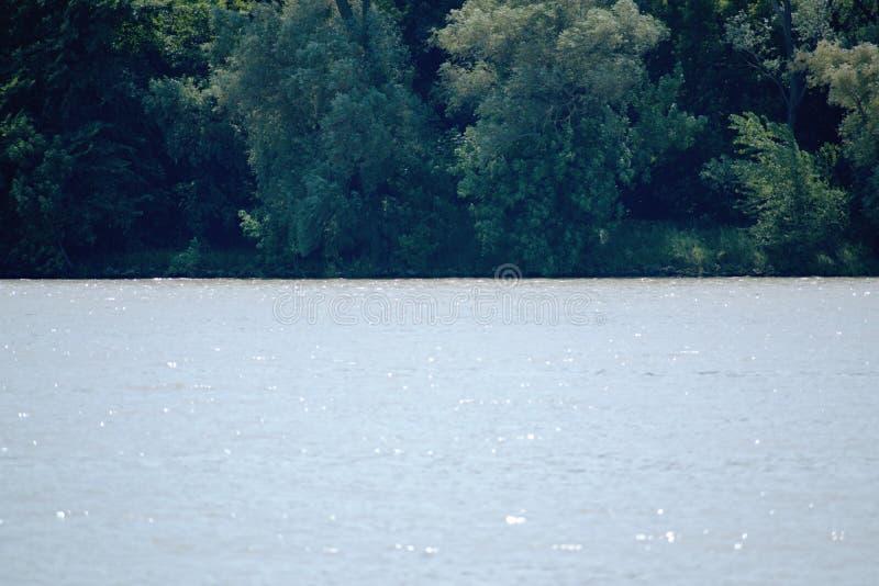 Drzewa - Danube rzeka obraz stock