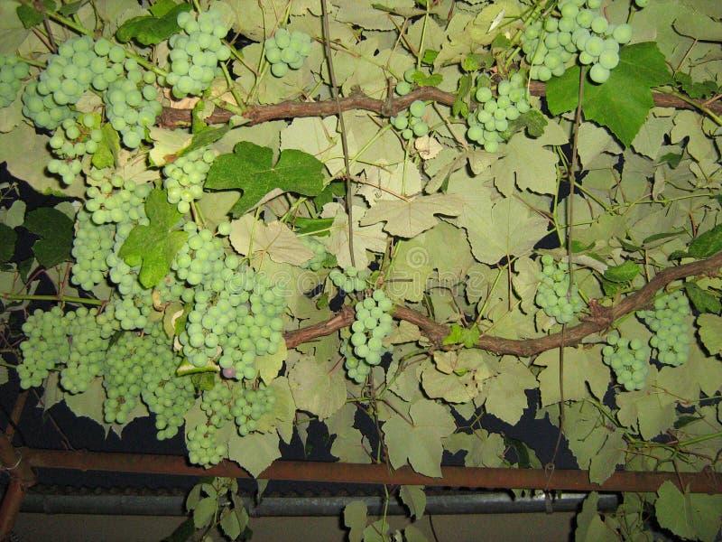 Drzewa, dekoracja miasto Przyrzeczenie czyste powietrze i dobre zdrowie zdjęcia royalty free