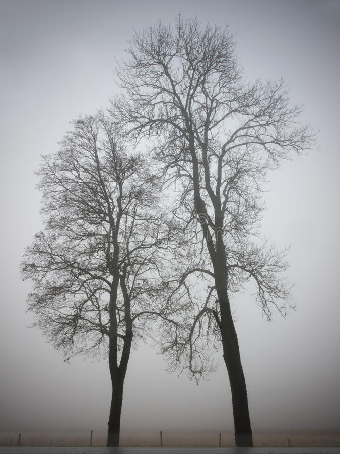drzewa dwa obraz stock