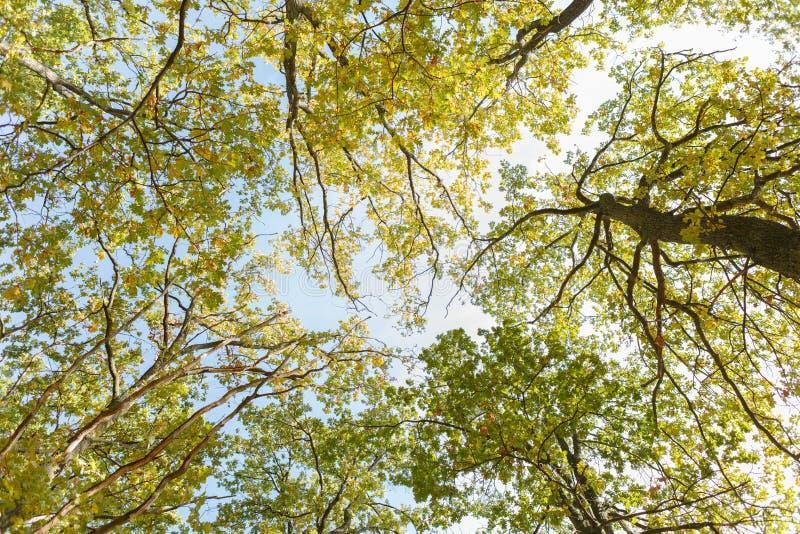 Drzewa fotografujący spod spodu obrazy stock