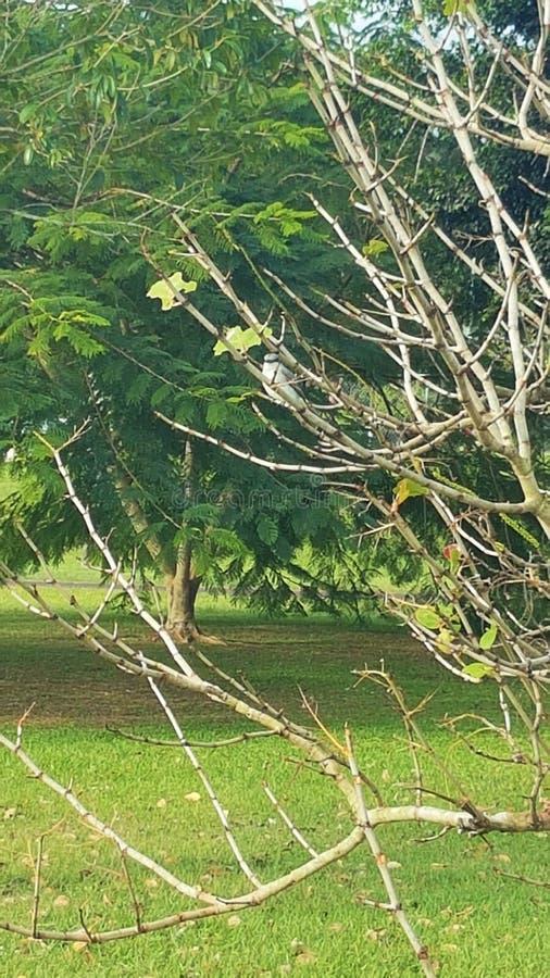Drzewa, gałąź i ptak, zdjęcie stock