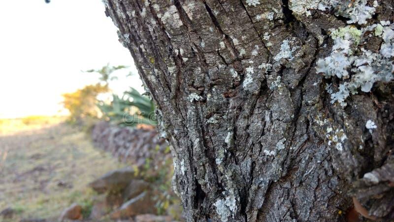Drzewa i agawa fotografia royalty free