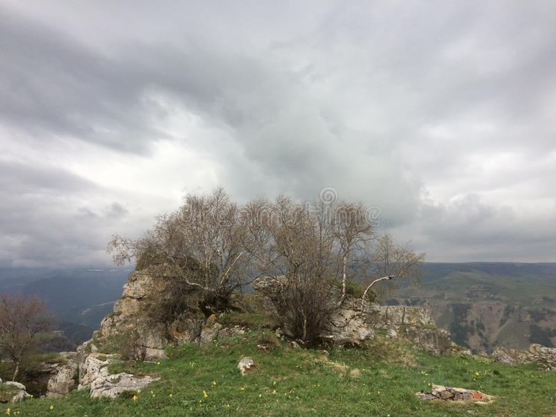 Drzewa i chmury obrazy stock