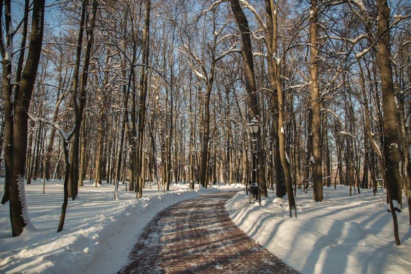 Drzewa i droga w zimie na jasnym dniu w parkowym Tsaritsyno obraz royalty free