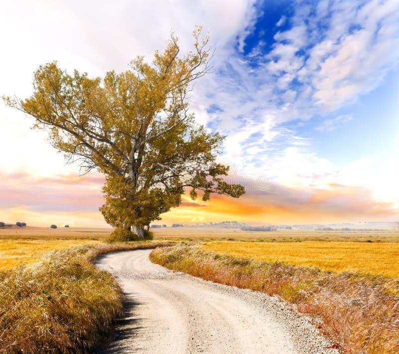 Drzewa i drogi krajobraz obraz royalty free