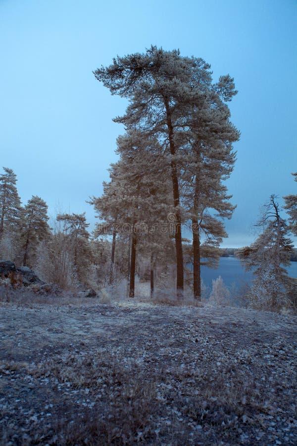 Drzewa i jezioro obraz royalty free