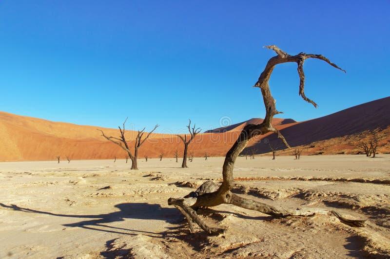 Drzewa i krajobraz Nieżywa Vlei pustynia, Namibia obraz stock