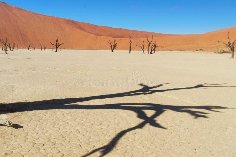 Drzewa i krajobraz Nieżywa Vlei pustynia, Namibia obraz royalty free