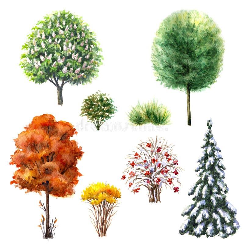 Drzewa i krzaki podczas różnych sezonów ilustracja wektor
