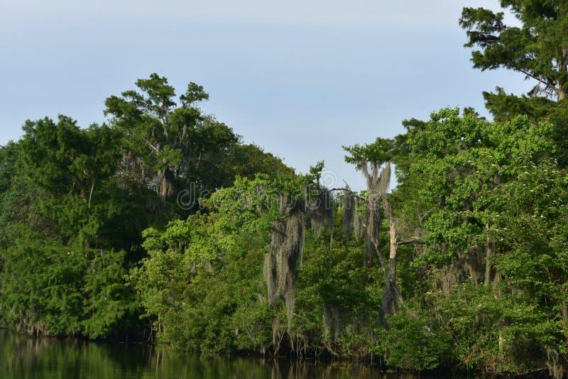 Drzewa i krzaki Wzdłuż krawędzi drogi wodne w zalewisku obrazy stock
