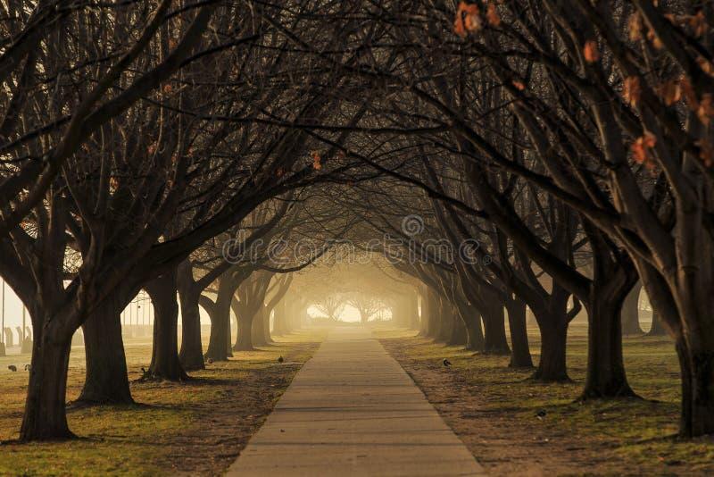 Drzewa i mgła wzdłuż ścieżki fotografia royalty free