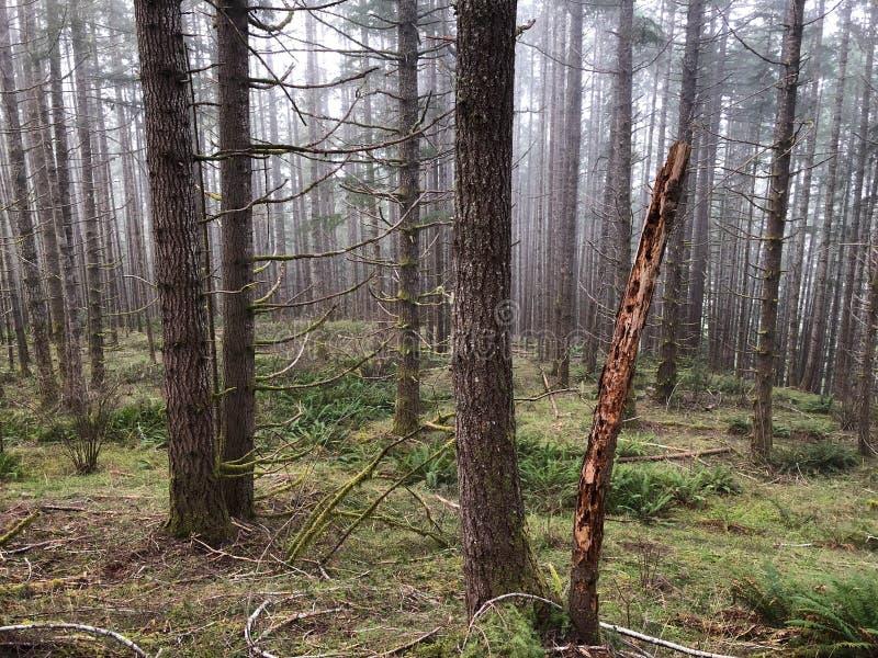 Drzewa i muśnięcie w lasowej górze obrazy royalty free