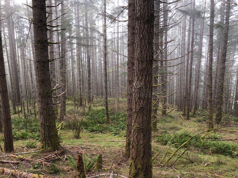 Drzewa i muśnięcie w lasowej górze zdjęcie royalty free