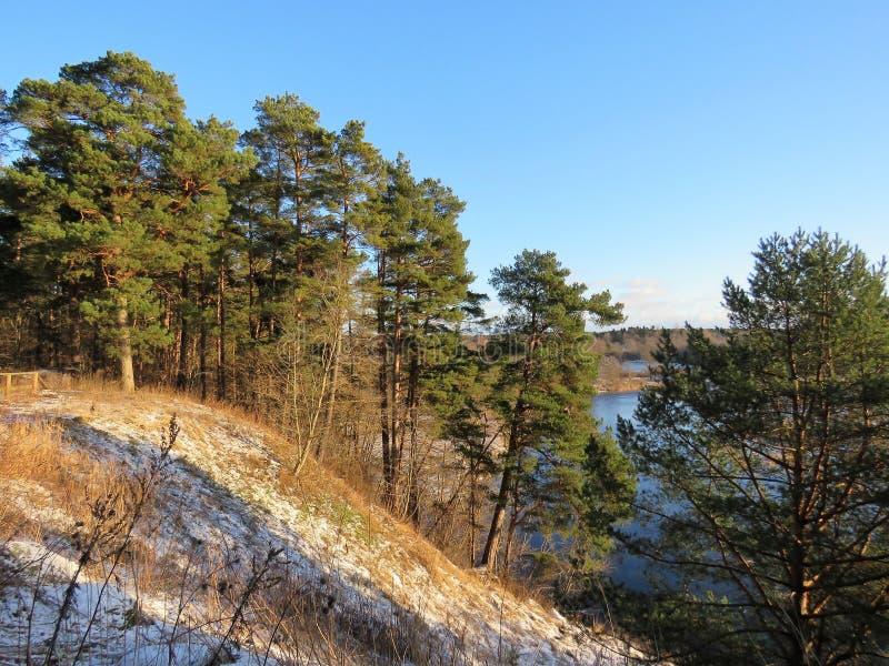 Drzewa i niebo Estonia w zimie 2018Wiin Estonia są zawsze niebieskim niebem i Pirita rzeką śniegu i zieleni oczywiście fotografia royalty free