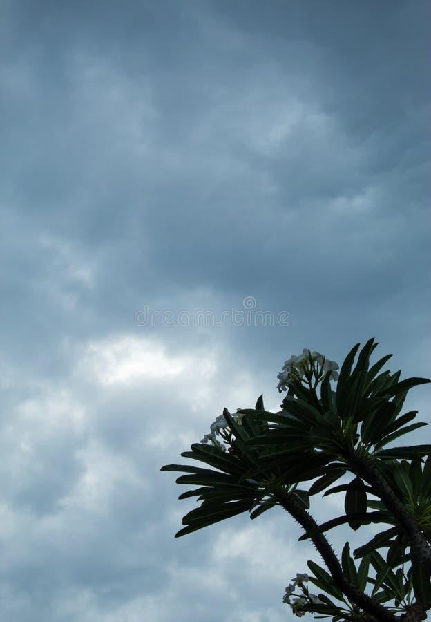 Drzewa i niebo po tym jak deszcz i chmurzący zdjęcia stock